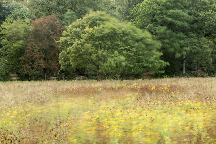 Hanging Meadow, a rich traditional meadow at Wakehurst Place - Royal Botanic Gardens, Kew. Ardingly, West Sussex, UK.