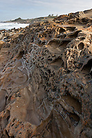 Tafoni caves etched in the bluff at Bean Hollow State Beach on California's Central Coast.