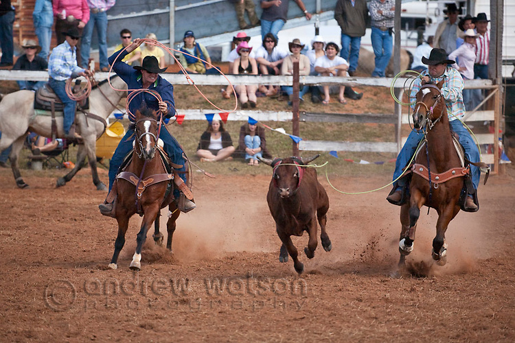 Team calf roping competition at the Mt Garnet Rodeo.  Mt Garnet, Queensland, Australia