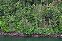 WASJ_D173 - USA, Washington, San Juan Islands, Shaw Island, Forest of Douglas fir with scattered Pacific madrone trees above rocky shoreline.