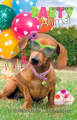 Samantha, ANIMALS,  photos,+dogs,++++,AUKPLP076,#A# Humor, lustig, divertido