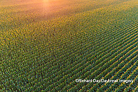 63801-10602 Corn field at sunset-aerial Marion Co. IL
