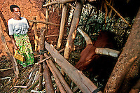 Shyrongi / Rwanda 2003. Beatrice Mukamusoni, leader of one group of widows of the genocide and their children living in the coutry side, supported by Ngo Avega with agriculture projects, housing and education.<br />