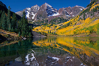 Colorado blue spruce and aspen<br />