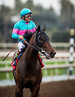 ARCADIA, CA - FEBRUARY 04: Royal Mo #1, ridden by Victor Espinoza returns after winning the Robert B. Lewis Memorial Stakes at Santa Anita Park on February 4, 2017 in Arcadia, California. (Photo by Alex Evers/Eclipse Sportswire/Getty Images)