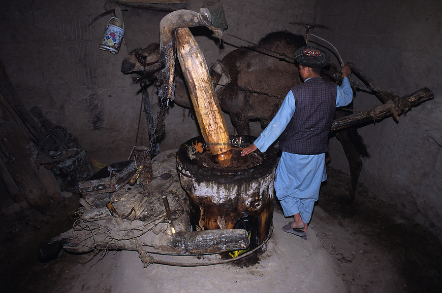 Farmer using a tratitional Mill for oilseed and oilfruits