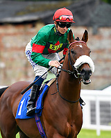 Grove Ferry ridden by David Probert goes down to the start  of The First Carlton Novice Auction Stakes Div 2  during Evening Racing at Salisbury Racecourse on 11th June 2019