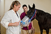Mississippi State University, College of Veterinary Medicine, Assistant Professor, Jacquelyn Bowser and Class of 2015 student, Sagen Gunnoe, with equine patient.