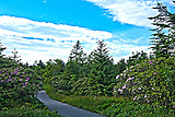 A trail path in HDR of Rhododendron garden looks amazing with the flowers, trees and sky as beautiful as in painting.
