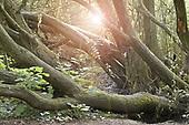 Mature Woodland