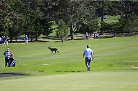 Deer runs across the fairyway as Paul Dunne (IRL) prepares to chip onto the 1st green during Thursday's Round 1 of the 2018 AT&amp;T Pebble Beach Pro-Am, held over 3 courses Pebble Beach, Spyglass Hill and Monterey, California, USA. 8th February 2018.<br /> Picture: Eoin Clarke | Golffile<br /> <br /> <br /> All photos usage must carry mandatory copyright credit (&copy; Golffile | Eoin Clarke)