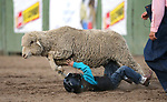 Breighdon Swenson, 7, competes in the Mutton Busting event at the 5th Annual Carson City Bulls, Broncs &amp; Barrels event at Fuji Park, in Carson City, Nev., on Saturday, July 29, 2017. <br />