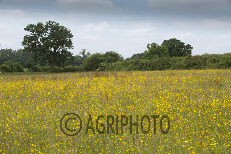 Wild flower meadow <br /> &copy;Tim Scrivener Photographer 07850 303986<br /> ....Covering Agriculture In The UK....