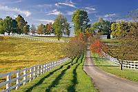 Driveway, Manchester Horse farm, Lexington, Kentucky