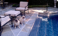 This custom pool features a 9 inch Hex border shown in honed Nero Marquina, Statuary Carrara and Socorro Gray from New Ravenna. <br /> <br /> -courtesy of Stafford Tile<br /> <br /> For pricing samples and design help, click here: http://www.newravenna.com/showrooms/