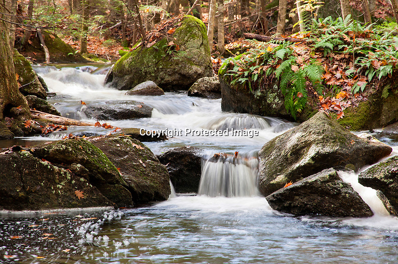 Bubbling Forest Stream