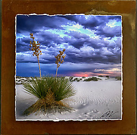 """Lone Yucca - Mixed Media - New Mexico<br /> <br /> Each unique piece is made to order. If I have the piece in stock I can ship it in 2-3 days. If I don't have it in stock and it has to be made, it will ship in 1-2 weeks. Feel free to contact me at chey.rouse@gmail.com before you order if you need the piece ASAP. <br /> <br /> The photograph is printed on a Silk photo paper, the edges of the photo are torn, photo is mounted to foam board, then I mount it to an 8""""x8"""" piece of rusted metal. The rust is unique on each piece...no two pieces are alike. PLEASE keep in mind that the rust on the piece(s) you receive may be slightly different than the photo. Each piece of metal is sealed after it is done """"rusting"""" and is titled, hand signed and, ready to hang. To see the detail for theses Mixed Media pieces please click on the 1st photo in this gallery. You will be able to see the detail of the torn paper edge as well as the back of the piece. Just click on the piece that you like in this Gallery and then click the GREEN """"BUY"""" button in the left hand corner to add it to your cart."""
