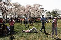Cherry blossoms, Washington DC; 326pm, 2April2006