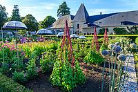 France, Loir-et-Cher (41), Cheverny, château de Cheverny, le jardin bouquetier avec poireaux en fleurs, ipomées, dahlia, tomates et ombrelles...