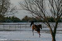 White Pasture Christmas