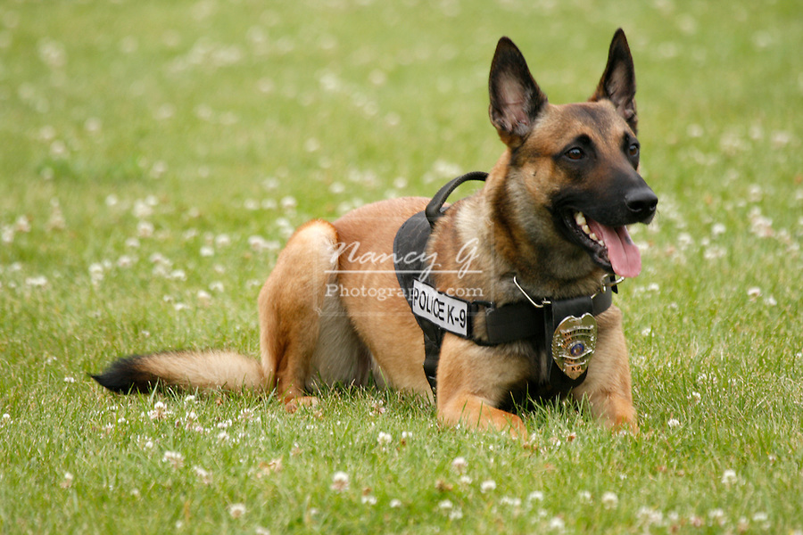 Police K-9 dog for Brown Deer Wisconsin