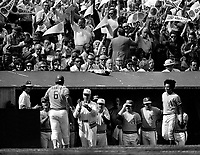 A's Sal Bando comes to dugout after HR against the N.Y Mets in the 1973 World Series..greeted by teammates.(photo/Ron Riesterer)