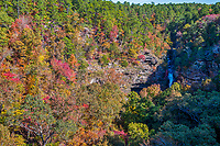 Autumn at Cedar Falls2 - A cedar fall drops down over the cliff where you can see a variety of colorful trees on it journey to the river below for some wonderful scenery.  This scenic area native trees contains an abundance of the many cedars, and pines like the southern yellow pine but also included are the sugar and red maples, the oaks, black hickory along with a pop of red from the sweet gum tree through out the hill side in the fall season.  The waters flow from upstream where Lake Bailey is dammed in the Jean Petit Park over the cliff.