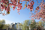 View of the Left Bank from Notre Dame Park in Spring, Paris, France