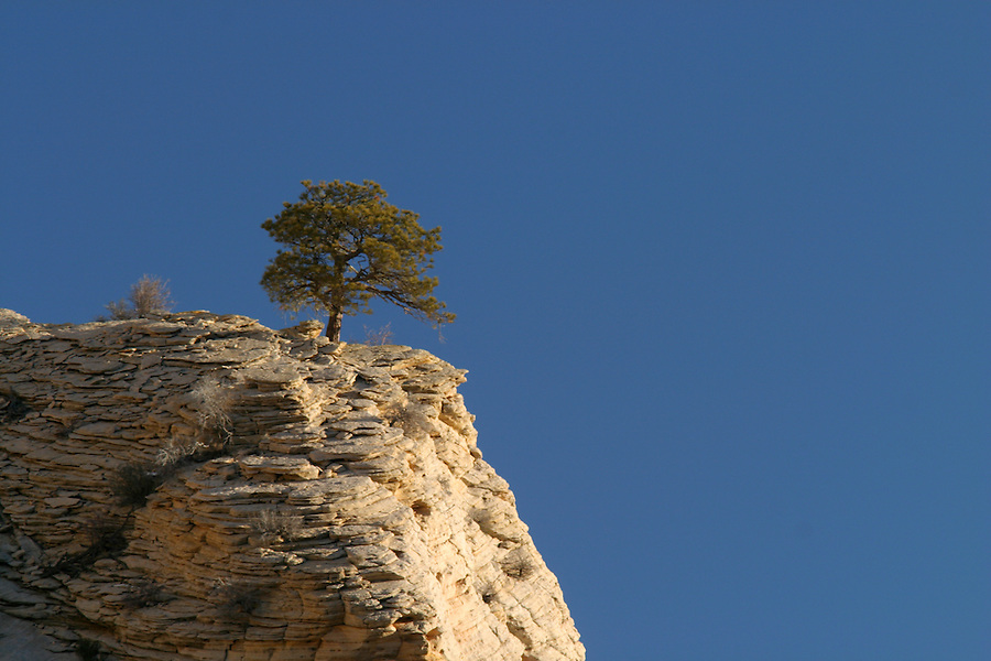 Tree on clifftop against blue sky, Zion National Park, Washington County, UT