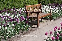 63821-21002 Bench in Tulips (Tulipa  'Negrita' (purple), 'Inzell' (White), and 'Mistress' (Pink) at Cantigny Gardens, Wheaton, IL