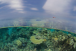 Coral reef in the far northern Great Barrier Reef, split level
