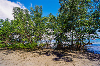 Indonesia, Sulawesi, Bunaken. Mangrove trees close to Liang Beach.