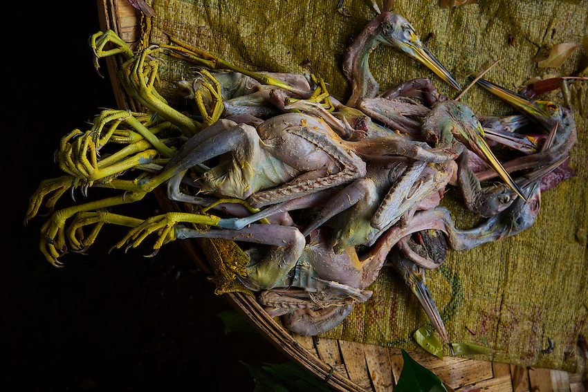 Water Birds - Egrets for sale at a Market outside Vientiane