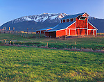 Wallowa County, OR<br /> Evening light on the red &quot;Welcome Stock Farm&quot; barn (1913) with Chief Joseph Mountain rising in the distance