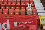 The head of the home team's mascot resting on a seat in the main stand at the Gateshead International Stadium, the athletics stadium which is also the home ground of Gateshead FC, on the day the club played host to Cambridge United in a Blue Square Bet Premier division fixture. The match ended in a one-all draw, watched by a crowd of 904. The point meant Gateshead went to the top of the division, one below the Football League in England.