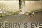 Floods Brendan's Park, Monavalley Ind Estate