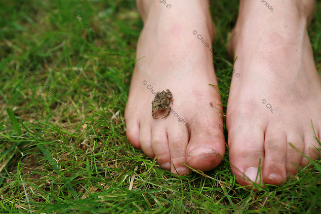 Photo of a Baby Toad Perched on a little Boy's Dirty Foot in the Grass.