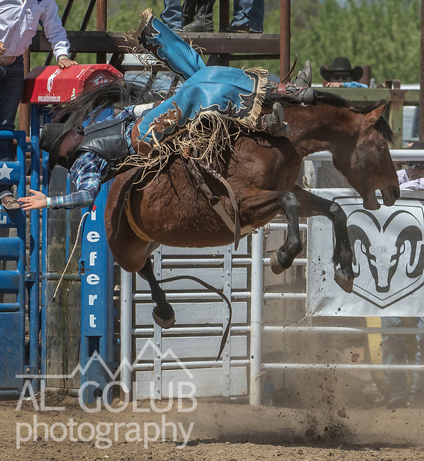 Bareback rider Kyle Labrucherie fro Livermore, California at the 68th annual Oakdale Saddle Club Rodeo on Sunday, April 14, 2019.  (Al Golub/Record Photo)