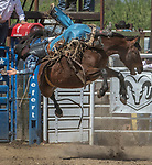 Bareback rider Kyle Labrucherie fro Livermore, California at the 68th annual Oakdale Saddle Club Rodeo on Sunday, April 14, 2019.  (Al Golub/Record Photo)
