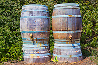 Rain barrels irrigate vegetable field in western Oregon.  Lushcer Farms Park.  47th Avenyue Farms.  Lake Oswego, Oegon