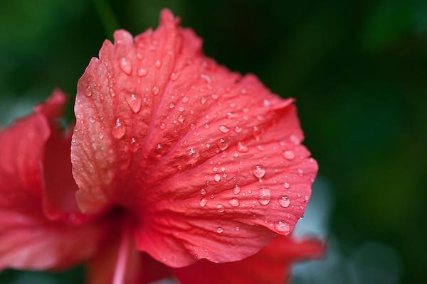 Costa Rica Plants, Flowers, Food