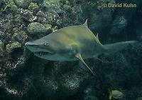 0128-08tt  Sand Tiger Shark, Carcharias taurus © David Kuhn/Dwight Kuhn Photography