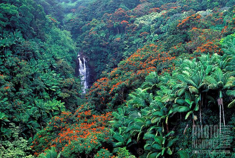 Waterfall along the Hamakua Coast, Big Island