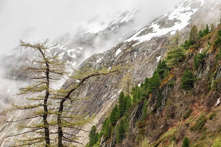 This larch tree provides the foreground element in the rugged canyon of Mer de Glace located above the French Alps town of Chamonix.