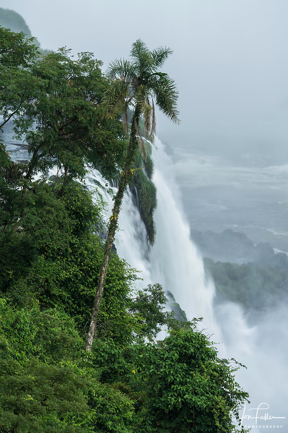A palm tree in front of one of the falls at Iguazu Falls National Park in Brazil.  A UNESCO World Heritage Site.