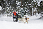 Dogsled racer in Seeley Lake, Montana
