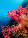 Du Li Jiao (Independence Reef), Green Island -- Soft coral on a sea mount with diver in the background.