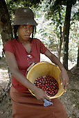 A young woman farm worker collects nutmeg and mace