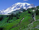 Mt Rainier National Park, WA    (C) Terry Donnelly  /<br /> The lush green ridges of Paradise Park and Mt Rainier from the Alta Vista Trail