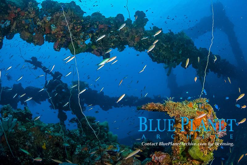 diver, rebreather, King Post, soft corals, encrusted, superstructure, fish, Fujikawa Maru in Truk Lagoon, Operation Hailstone, Wreck, WWII, Japanese shipwreck, Chuuk, Micronesia, Truk, Chuuk Lagoon, Pacific Ocean, MR